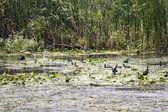Black small birds and vegetation — Stock Photo