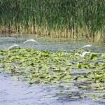 Danube Delta, Romania — Stock Photo #47802715