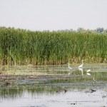 Danube Delta, Romania — Stock Photo #47802787