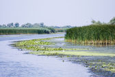 Danube Delta, Romania — Stock Photo