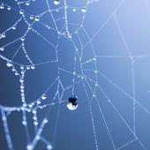 Gotas de agua sobre telas de araña — Foto de Stock