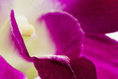 Pink and mauve orchid — Stock Photo