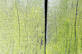 Wood texture from very old, weathered piece of wood with moss — Stock Photo