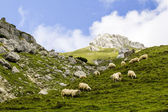 Landscape with sheep from Bucegi Mountains, part of Southern Carpathians in Romania — Stock Photo