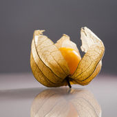 Closeup of Physalis peruviana fruits with light grey background and reflexions — Stock Photo