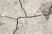 Cracked soil - texture and background — Стоковое фото