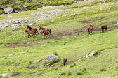 ルーマニア トランシルバニア アルプス山脈の一部ブチェジ山脈からの馬のいる風景します。 — ストック写真