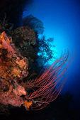 Bali corals — Stock Photo