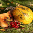Yellow pumpkin on grass — Stock Photo