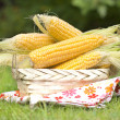 Fresh corn cobs in a basket on a grass — Stock Photo