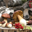 Forest ceps on wooden box — Stock Photo
