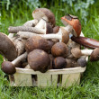 Aspen mushrooms and boletus mushrooms in a wicker basket — Stock Photo