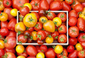 A lot kinds of tomatoes — Stock Photo