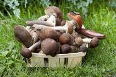 Aspen mushrooms and boletus mushrooms in a wicker basket — Stock Photo