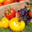 The harvest of red and yellow tomatoes — Stock Photo