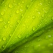 Постер, плакат: Macro image of a wet leaf