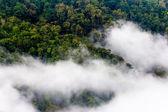 Morgen nebel abdeckung kiefer baum wald form chiangmai thailand — Stockfoto