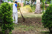 Man with rake collects leaves — Stock Photo