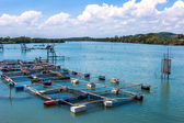 Cage aquaculture farming, Thailand — Stock Photo