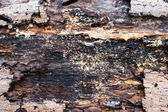Wood cross section, backgrounds bark and wood texture — Foto de Stock