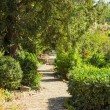 Stock Photo: Paved footpath in garden