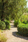 Paved footpath in the garden — Photo