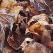 Autumn brown leaves with frost — Stock Photo #39524393