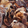 Autumn brown leaves with frost — Stock Photo