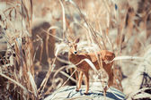 Toy roe deer in tall grass — Stock Photo