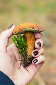 Edible boletus mushroom in female hand — Stock Photo