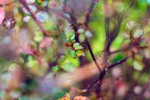 Selective focus of rosebush — Stock Photo