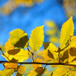 Colors of autumn leaves — Stock Photo #37432289