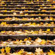 Autumn leaves on stair — Lizenzfreies Foto