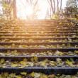 Stair autumn leaves — Foto de Stock