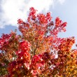 Autumn tree blue sky — Lizenzfreies Foto