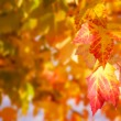 Autumn leaves copyspace — Foto de Stock