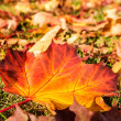 Leaf in autumn sun — Lizenzfreies Foto