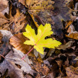 Single leaf — Lizenzfreies Foto