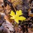 Single leaf — Foto de Stock