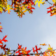 Autumn leaves border design — Stock Photo