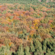 Flight view autumn forest — Lizenzfreies Foto