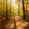 Sunlight in forest — Lizenzfreies Foto