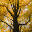 Tree in autumn — Foto de Stock