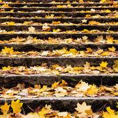 Herbstlaub auf treppe — Stockfoto