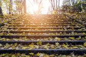 Stair autumn leaves — Stock Photo