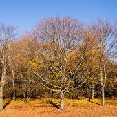 Tree in late autumn — Foto Stock