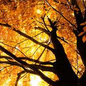 Baum im herbst sonnenlicht — Stockfoto