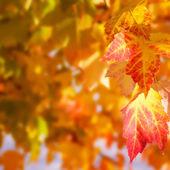 Boşaltmak sonbahar yaprakları — Stok fotoğraf