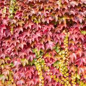 Höstens bakgrund — Stockfoto