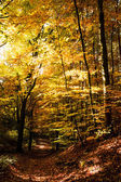 Pad in de herfst — Stockfoto